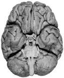 image403